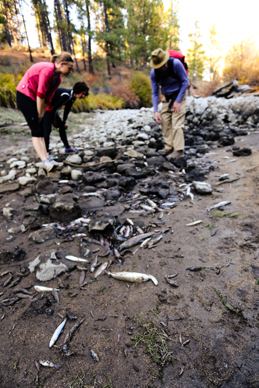 Concerned Citizens about the Recent Deschutes River Fish Kill
